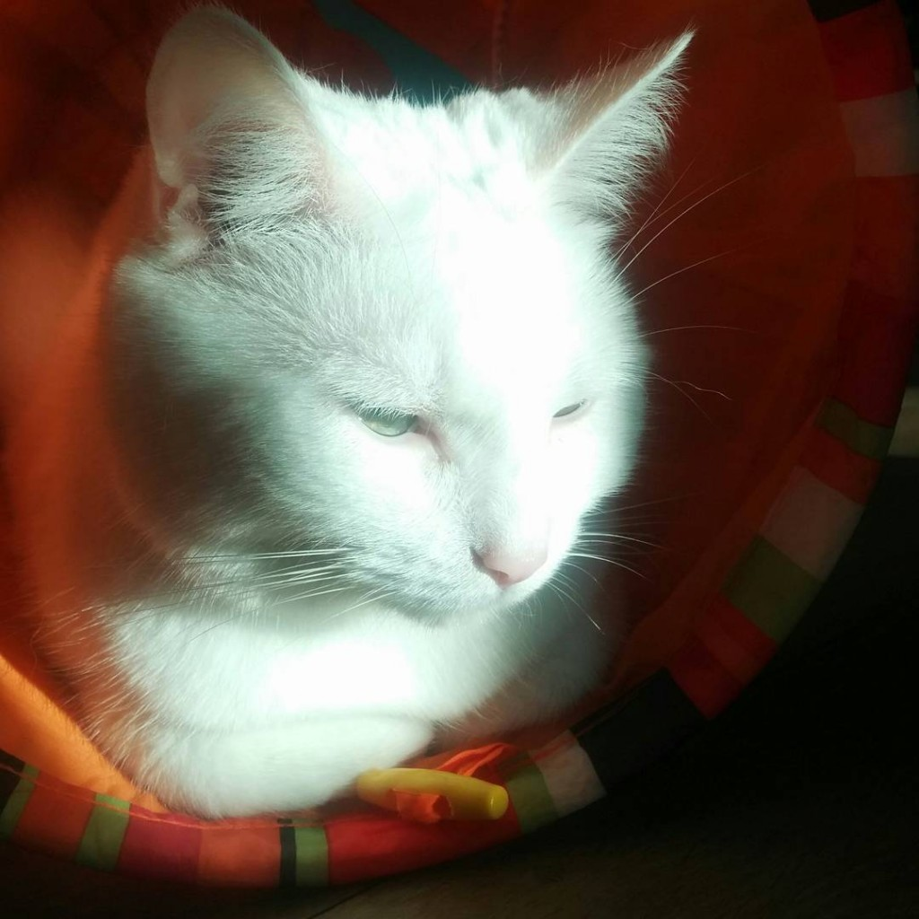 I am having a wonderful Caturday meditating in the sun! Hope yours is great too! #caturday #saturday #whitecats #daily_category #meow #whiskers #love #relax