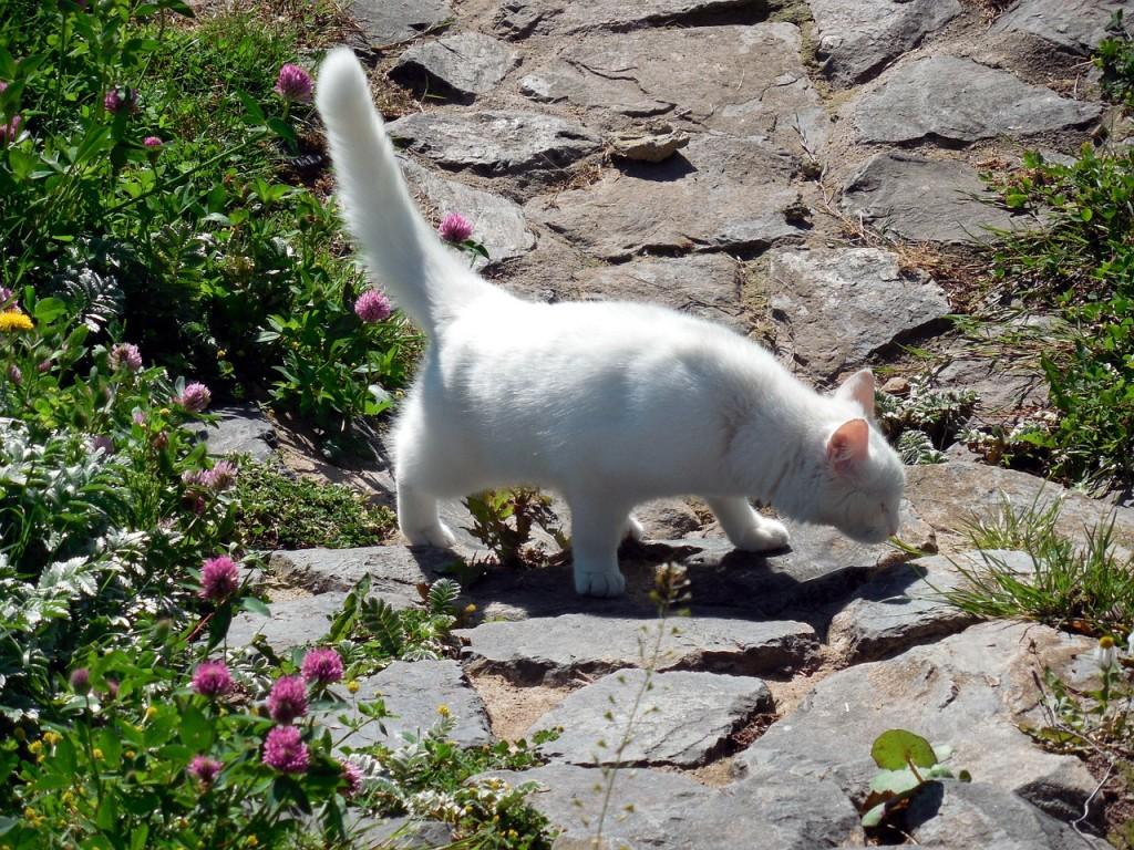 cat-353736_1280
