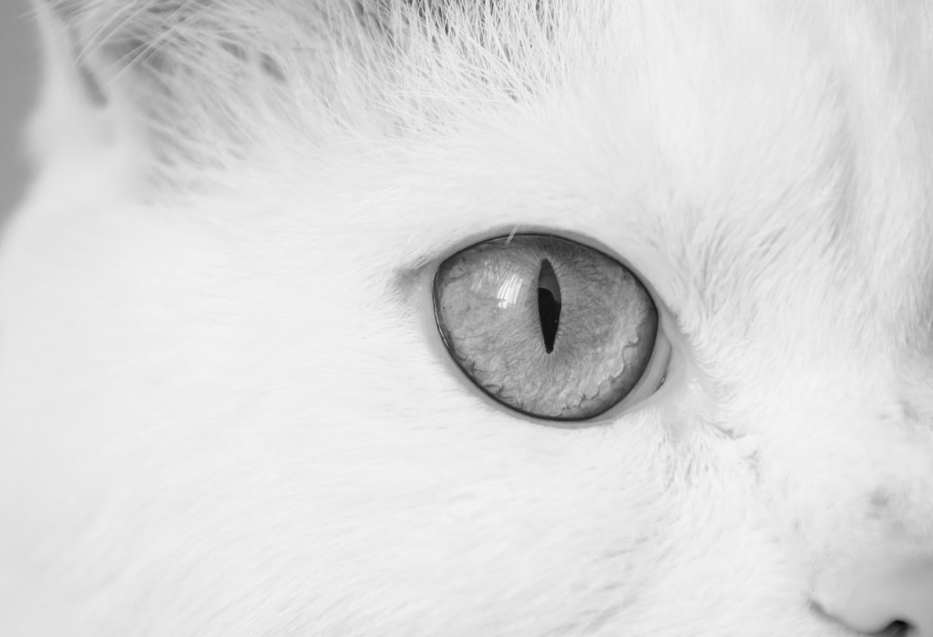 cat-843457_1280